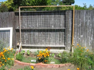 Trellis with bean plants